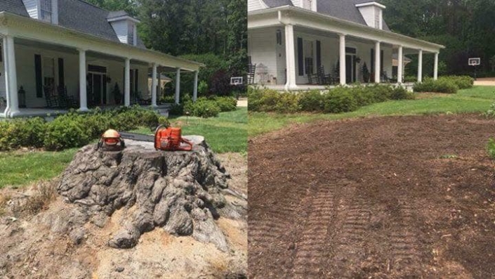 Stump Grinding before : after