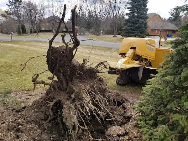 Stump removal Milwaukee