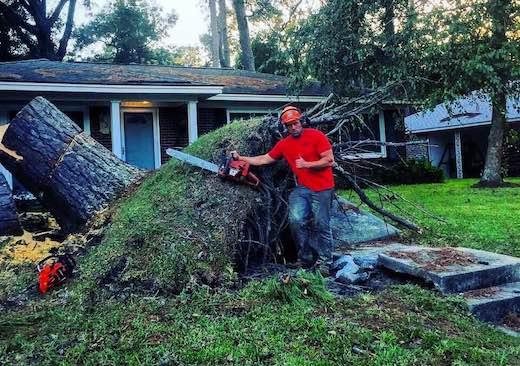 Tree Stump Removal Elm Grove